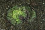 Koralldjur