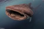 Hajar och rockor